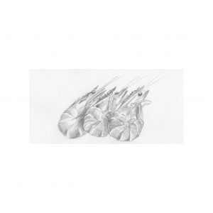saint malo- crevettes-sophiedeboissieu