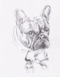 Portrait- dessin au crayon du bouledogue sookie sophie de boissieu