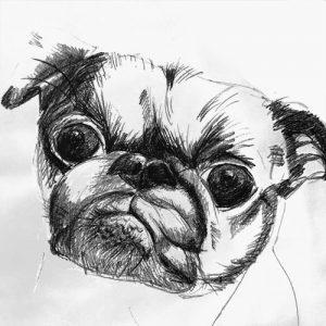 portrait animalier dessin croquis chien robespierre grand format