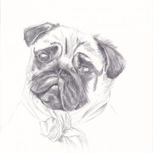 Portrait- dessin au crayon du carlin lady sophie de boissieu
