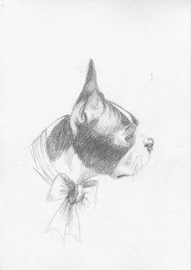 dessin au crayon du boston terrier melisse sophie de boissieu