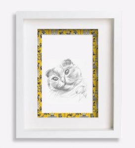 portrait de chat dessin-au-crayon-du-chat-scottish-fold-sophie-de-boissieu-