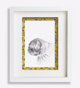 portrait animalier dessin-au-crayon-du-petit-brabançon-jacobine-sophie-de-boissieu-