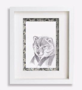 portrait animalier dessin-au-crayon-du-shiba-'fujisun'-sophie-de-boissieu-