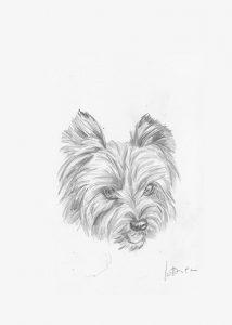 yorkshire - Portrait sur mesure 15 X 21 cm