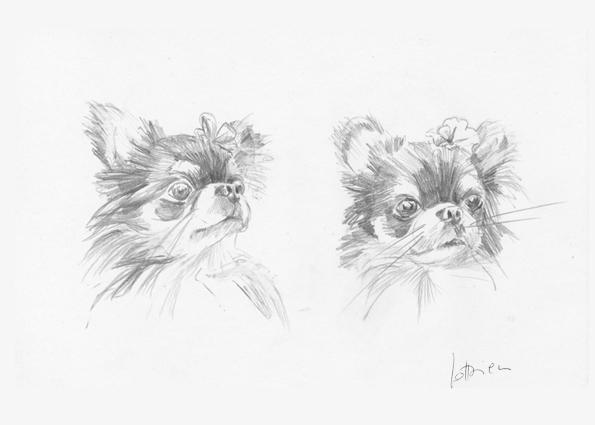 deux chihuahuas - 2 Portrait sur mesure 21 X 15 cm